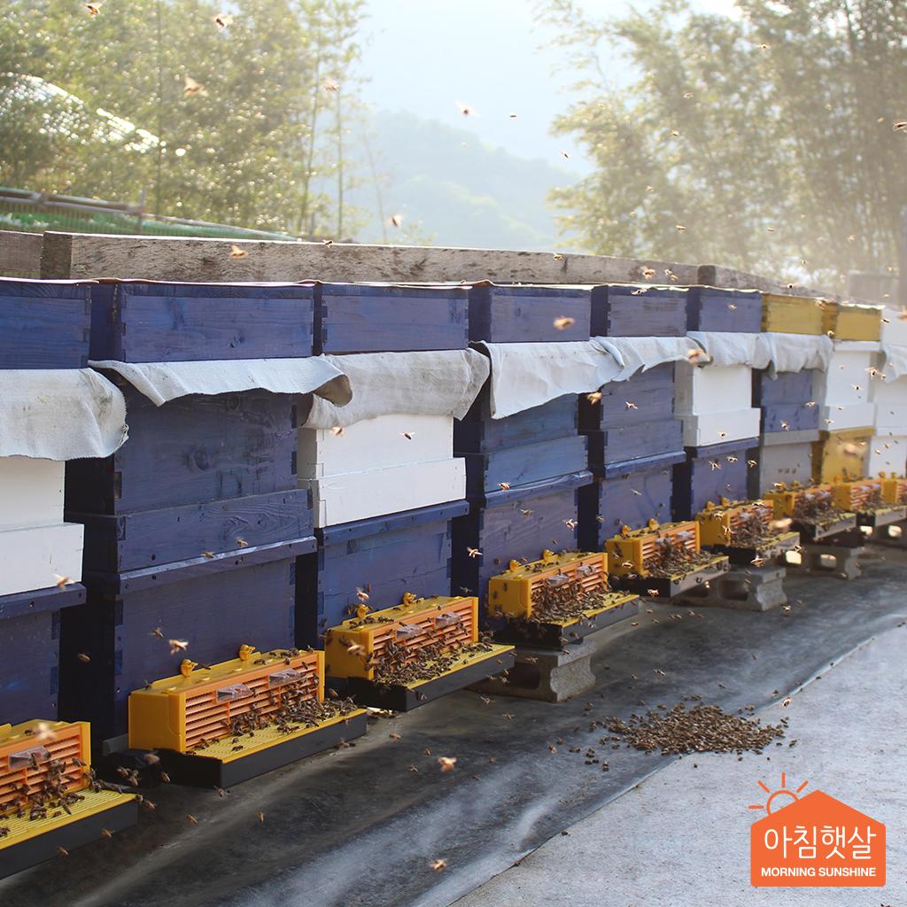 아침햇살농가 잡화벌꿀 2.4kg